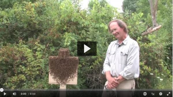 Cornell professor, biologist and beekeeper Thomas Seeley